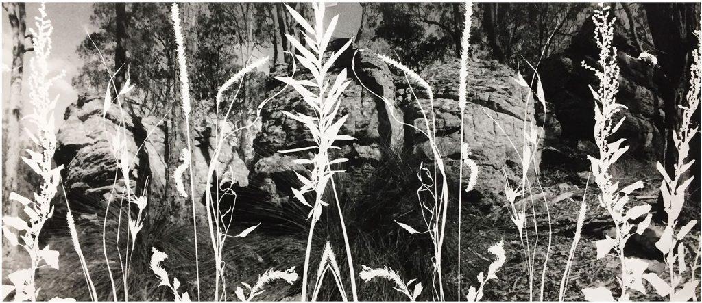 Composite Photogram